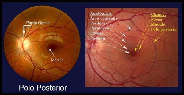 Oftalmologia-online - Retina